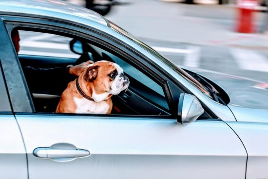 Car Repossessed With Personal Belongings In >> Car Repossessed You Might Be Able To Get It Back By Filing