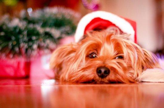 Christmas worry